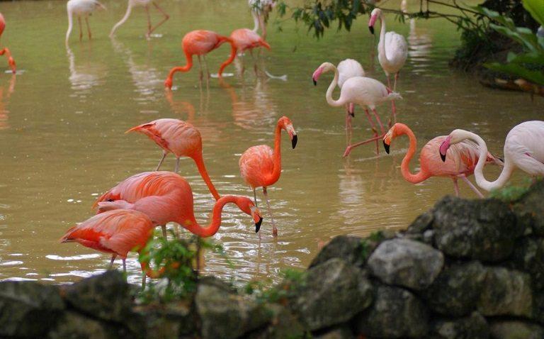 Công viên chim tại Kuala Lumpur