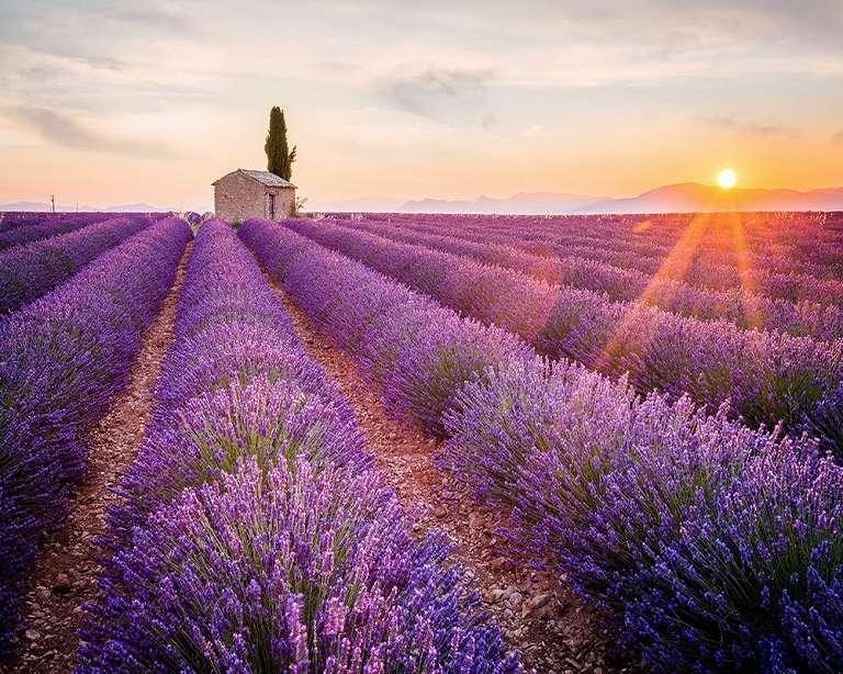 Mùa Hè ở Pháp ngọt ngào với những cánh đồng hoa Oải Hương