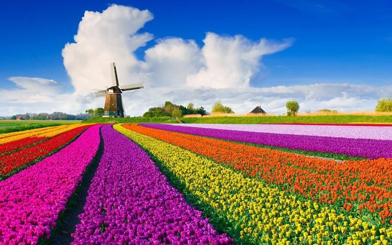 Những cối xay gió ở Kinderdijk