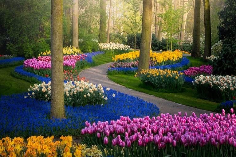 Vườn hoa Keukenhof - vương quốc của hoa tulip