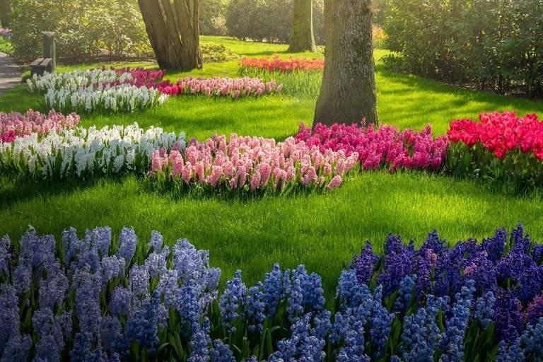 Kinh nghiệm du lịch Hà Lan - Khu vườn Keukenhof nổi tiếng với vườn hoa tulip