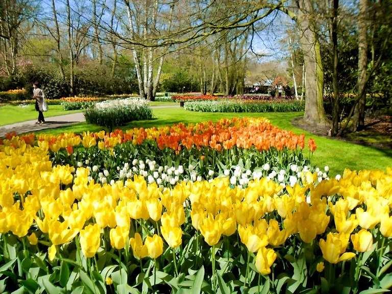Mùa xuân là mùa tuyệt vời nhất để du lịch Hà Lan